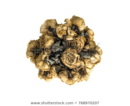 Bunch of Withered Roses Stock photo © zhekos