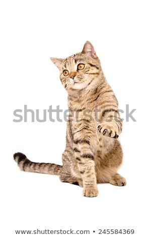 Csíkos macskanadrág izolált fehér lány divat Stock fotó © Elnur