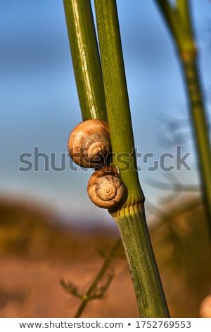 snail on a green bamboo stem stock photo © bbbar