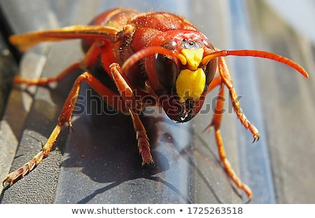 dode · wesp · spinnenweb · web · insect · close-up - stockfoto © dezign56