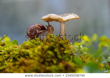 Snail on forest moss Stock photo © tang90246