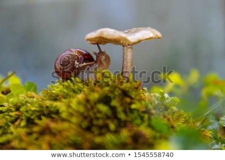 ślimak lasu mech piękna bokeh charakter Zdjęcia stock © tang90246