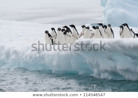 Iceberg with penguins in the arctic ocean Stock photo © Ustofre9