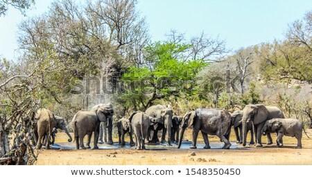 Elephant visits Waterhole stock photo © JFJacobsz