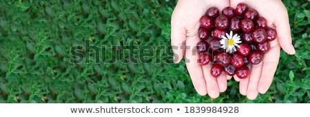cherry girl stock photo © stryjek