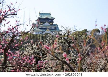 Osaka · kasteel · pruim · bloesems · voorjaar · seizoen - stockfoto © yoshiyayo