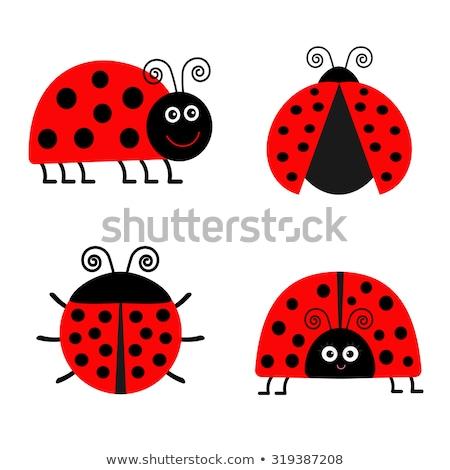 coccinelle · ponderosa · coccinelles · bug · insectes · vecteur - photo stock © derocz