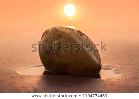 Verde dado bugie spiaggia di sabbia India goa Foto d'archivio © mcherevan