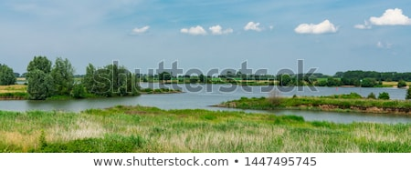 Holandés río paisaje nubes verano caballos Foto stock © ivonnewierink