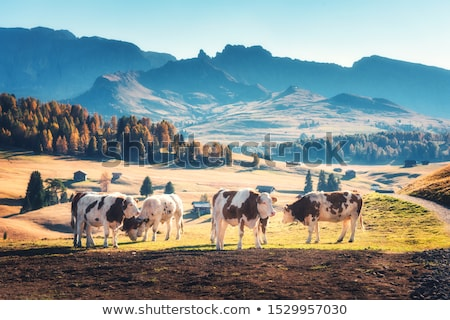 herd of cows in autumn stock photo © phbcz