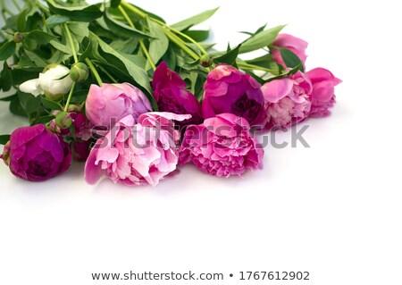 mooie · roze · tuin · drie · avond - stockfoto © rojoimages