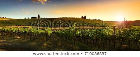 Toskana ev yol şarap güneş gün batımı Stok fotoğraf © Dar1930
