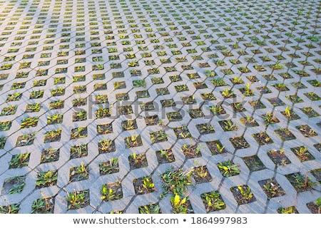 Szürke tégla fal kert stock fotó Stock fotó © nalinratphi