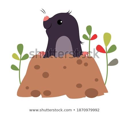 смешные иллюстрация земле почвы открытки Сток-фото © adrenalina