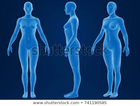 3D vrouwelijke lichaam anatomie cijfer half Stockfoto © illustrart