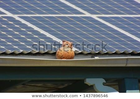 Uilen zonnepanelen illustratie zon elektriciteit cartoon Stockfoto © adrenalina