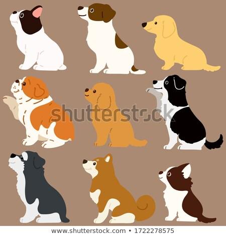 Cão vetor conjunto poodle terrier desenho animado Foto stock © natalya_zimina