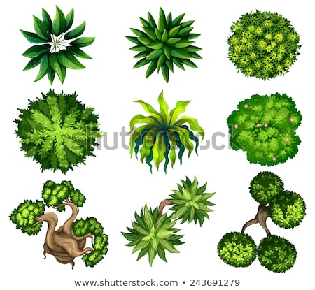 A topview of the green leafy plants Stock photo © bluering