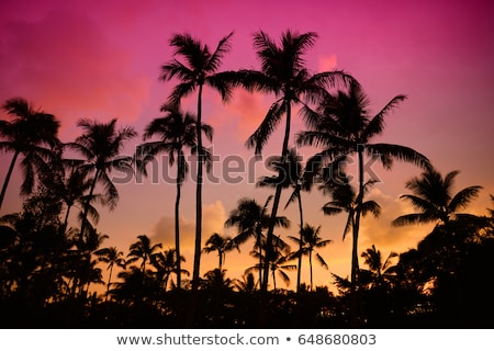 Palm tree sunset in Maui. Stock photo © iofoto