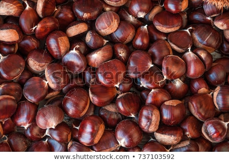 close up of chestnut on wooden table Stock photo © dolgachov