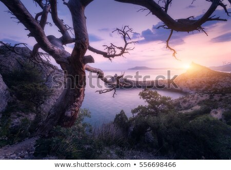 old tree on a rock by the sea stock photo © kotenko