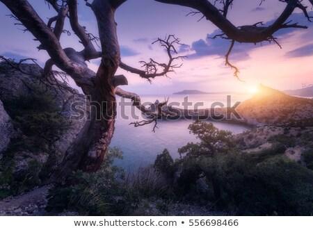古い ツリー 岩 海 例 生存 ストックフォト © Kotenko