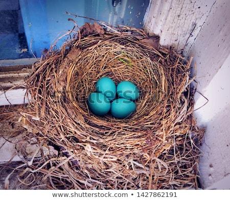 アメリカン 卵 座って わら 巣 ストックフォト © brm1949