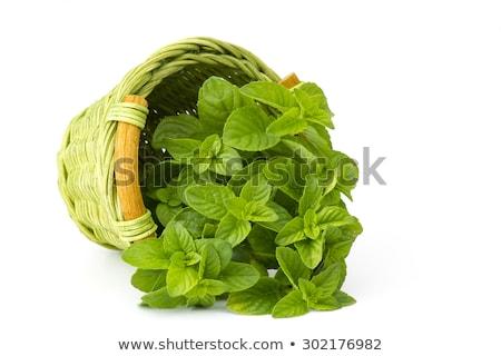 Сток-фото: Fresh Mint In Basket Mint Growing In Garden