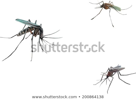 Mosquito isolated. Gnat illustration. Insect macro view Stock photo © Terriana