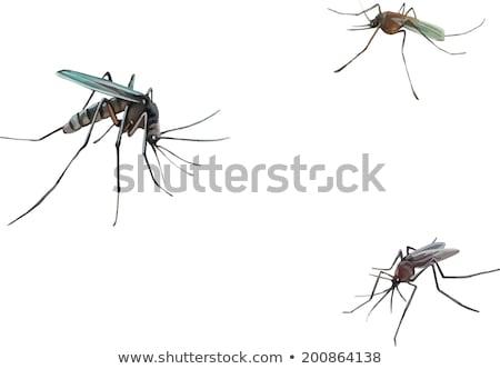 蚊 · 漫画 · スタイル - ストックフォト © terriana