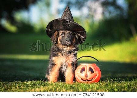 Хэллоуин · собака · гончая · вверх · подобно · тыква - Сток-фото © cynoclub