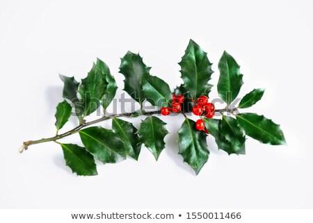 winter · christmas · Rood · bessen · maretak · sparren - stockfoto © marilyna