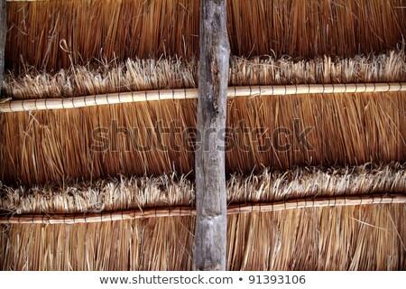 tropicales · hierba · cabaña · Caribe · playa · sol - foto stock © lunamarina