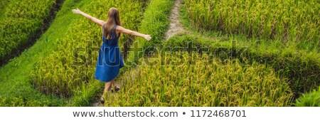 Young woman on Green cascade rice field plantation. Bali, Indonesia BANNER, long format Stock photo © galitskaya