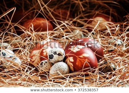 oeufs · œufs · de · Pâques · oignon · modèle · fraîches - photo stock © madeleine_steinbach