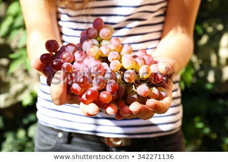 Gazdálkodás lány szőlőszüret felfelé bogyók szép Stock fotó © Anna_Om