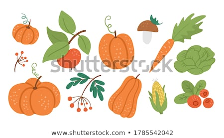 Pumpkin Veggie Autumn Set of Food and Meal Vector Stock photo © robuart