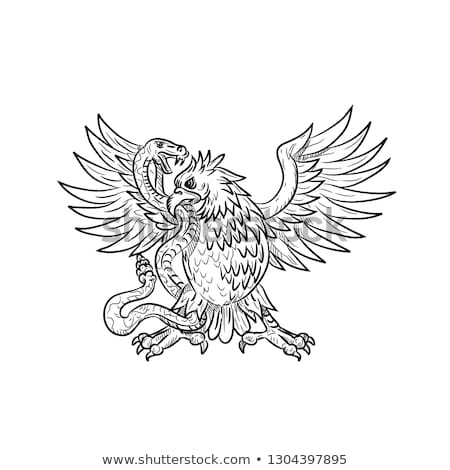 Mexican Eagle Fighting Rattlesnake Drawing Black and White Stock photo © patrimonio