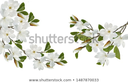 Blooming apple tree flowers in spring as floral background Stock photo © Anneleven