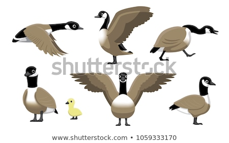 Gans meer natuur vogel Stockfoto © njnightsky