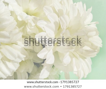 Beautiful flowers with nice defocused green background Stock photo © Nejron