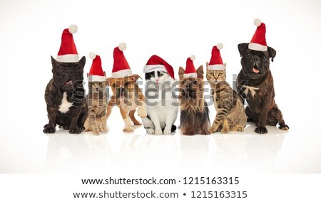 adorable team of seven christmas pets of different breeds stock photo © feedough