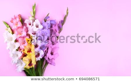 köteg · virágok · napos · megvilágított · színes · kék · ég - stock fotó © peredniankina