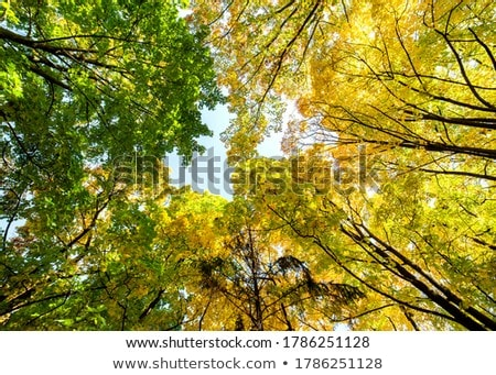 Low angle view of an autumn tree Stock photo © bmonteny