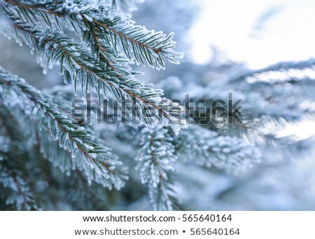 Ice and snow tree close up. Stock photo © latent