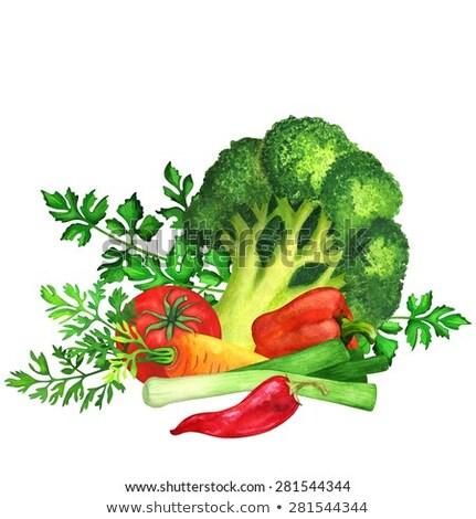 Cilantro on white background. Watercolor illustration Stock photo © ConceptCafe