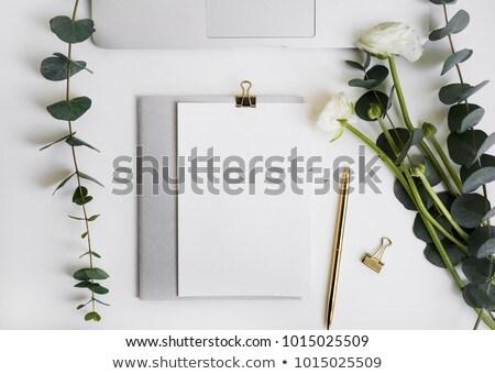 çiçekler · model · gül · beyaz · üst · görmek - stok fotoğraf © neirfy