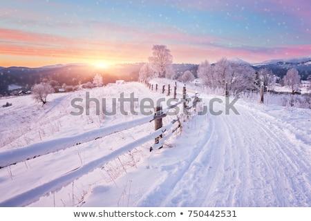 Belo inverno paisagem céu árvore sol Foto stock © EwaStudio