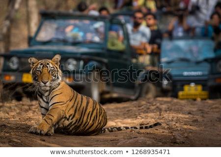 yol · orman · bölge · Hindistan · ağaç · Asya - stok fotoğraf © prill