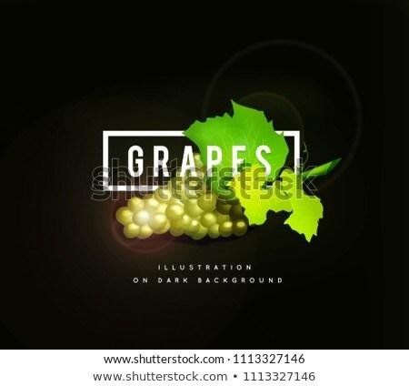 friss · szőlőtőke · keret · fekete · szőlő · izolált - stock fotó © m_pavlov